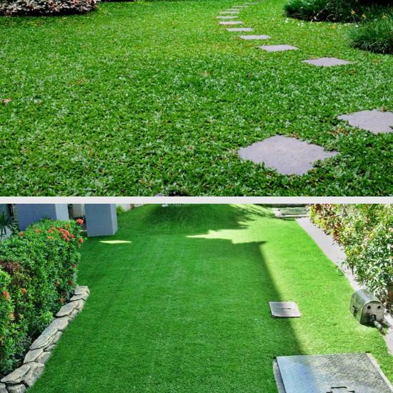 Jenis Rumput Hias