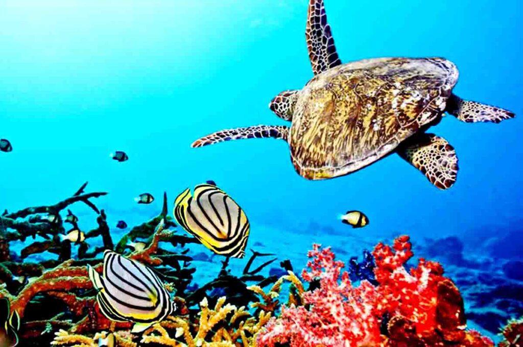 apa yang dimaksud dengan terumbu karang
